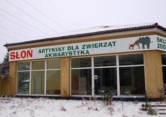 Reklama na witrynie Słoń